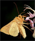 Moths invade homes and yards typically at night as they get attracted to any source of light they leave a powdery residue and can be quite the pest. Kill moths with one of these great moth products today